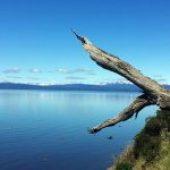 Proyecto de Ley que exige la remoción de sedimentos a los titulares de concesiones de acuicultura.